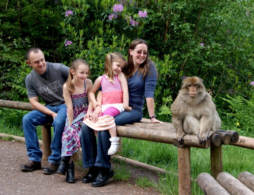 Monkey Forest Lifestyle