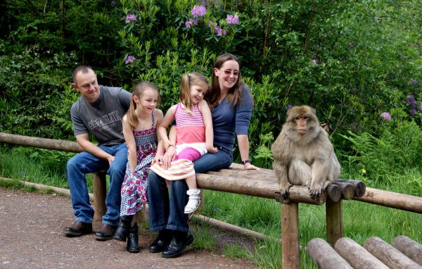 Monkey Forest lifetsyle