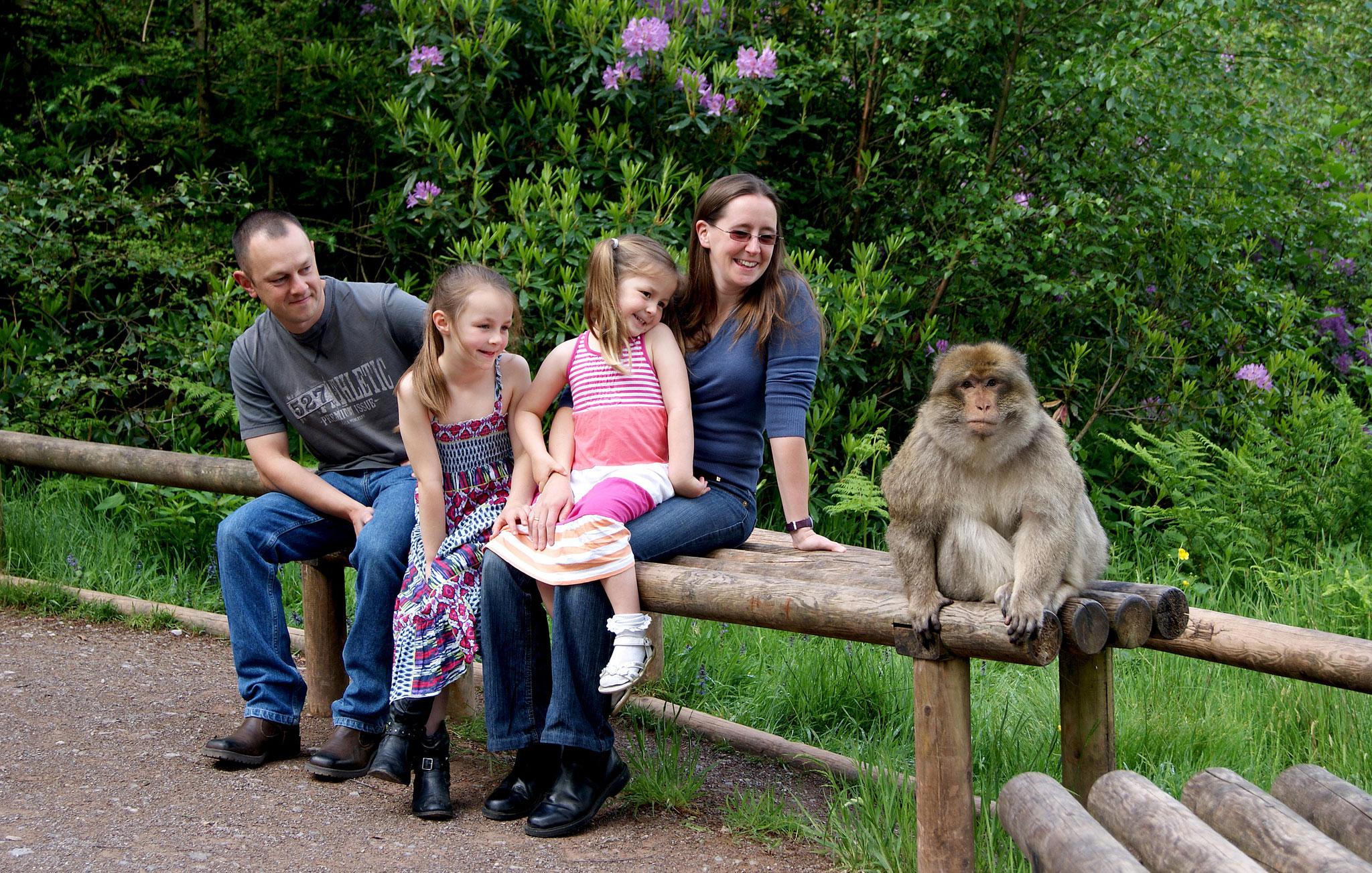 Monkey Forest lifetsyle